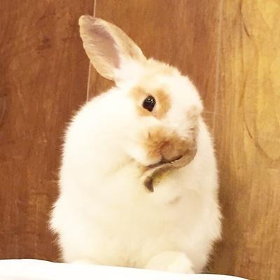 【写真を見る】ウサギのいろいろな姿を思う存分楽しもう