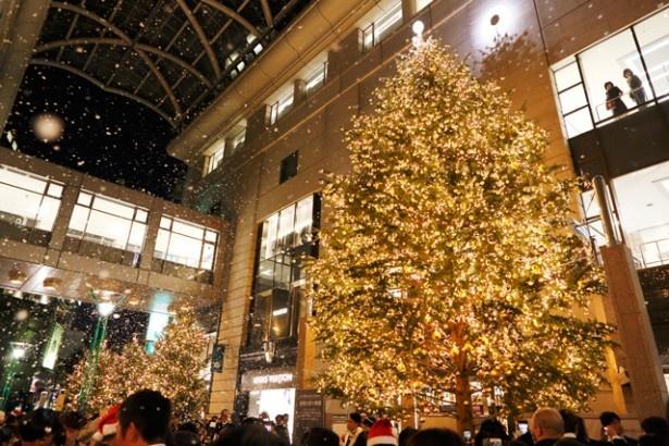 11月3日に行われた大丸福岡天神店のイルミネーション点灯式の様子。シャンパンゴールドに輝くツリーが目を引く