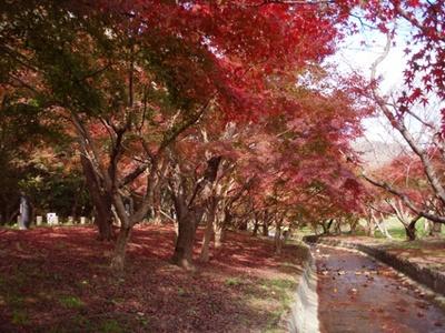 奈良時代から、平安時代に置かれた役所跡である「大宰府政庁跡」。紅葉樹が点在しているので、ゆったり紅葉散歩してみよう