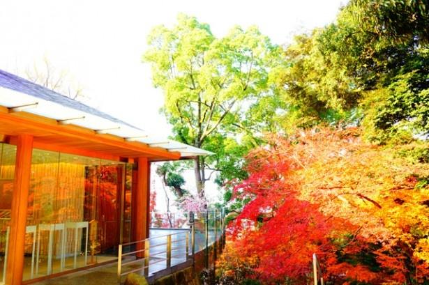 「竈門神社」の境内からは、太宰府市が一望できる。縁結びの御利益を求めて、若い女性の参拝客が多い