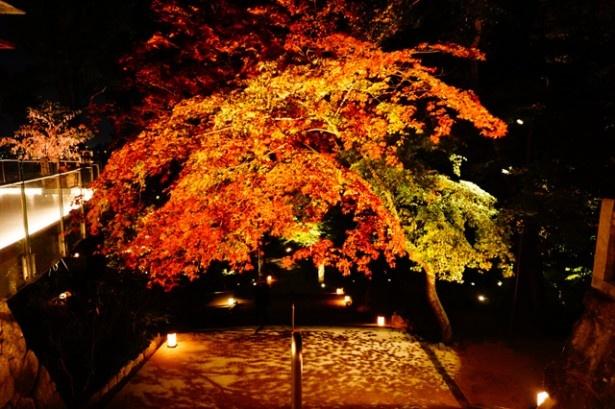 【写真を見る】11月下旬までライトアップされ、幻想的な雰囲気となる「竈門神社」。18時から21時まで点灯される