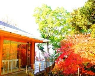 史跡と紅葉のコラボ!太宰府&筑紫野で秋旅を楽しむ