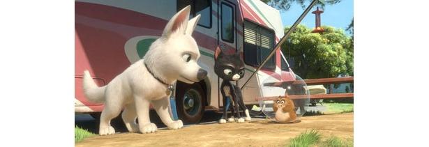 ボルトは、黒猫のミトンズ、ハムスターのライノと飼い主探しの旅に出る