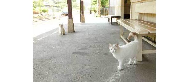 高滝駅でもネコ発見