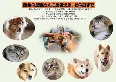 「NPO法人 犬猫愛護会 わんぱーく」が行ったパネル展で掲載された活動報告