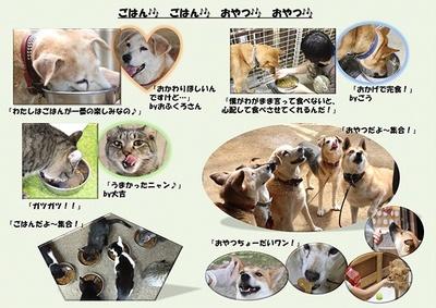 人と動物の共生を目指す(パネル展の活動報告から)