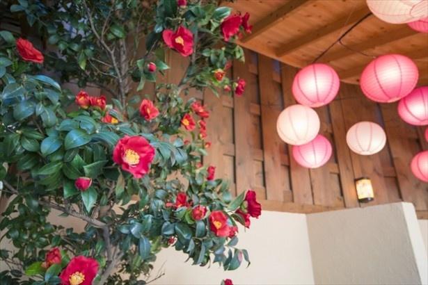 露天風呂のサイドには椿の花が