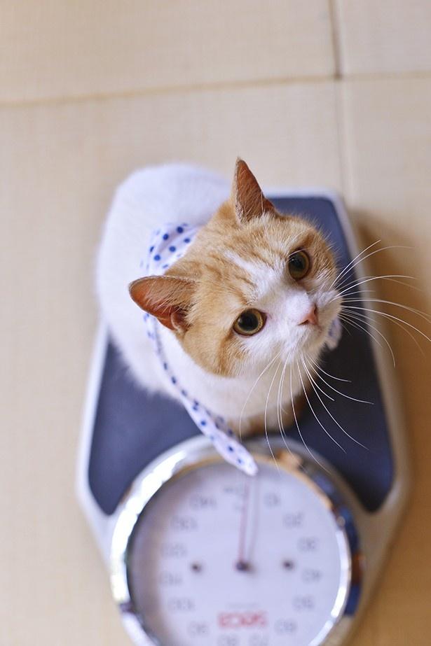 体重計に乗って顔が青ざめる(?)「にゃらん」