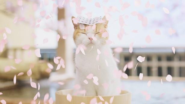 花びらが舞い散る中、気持ち良さそうに目を閉じる