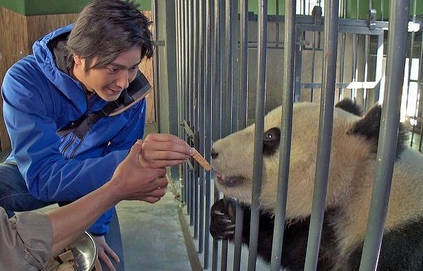 【写真を見る】パンダ研究・繁殖センターでは餌やりを体験!