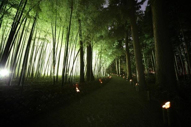 偕楽園の孟宗竹の中にキャンドル型のLEDライトを入れた「竹キャンドル」