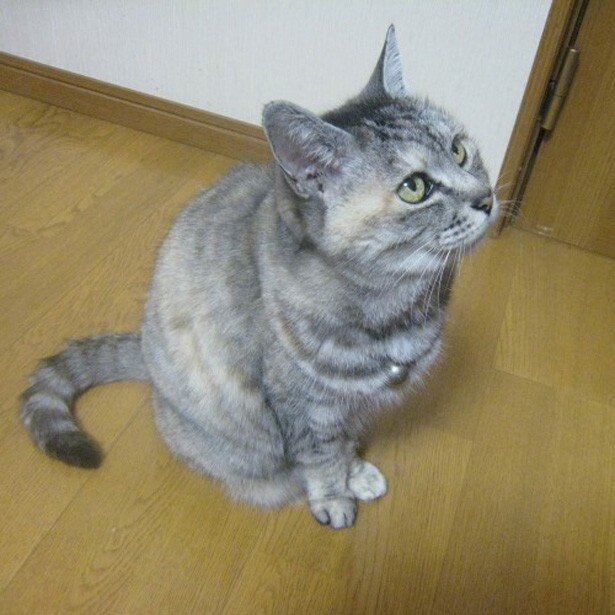 奈良県代表の「菜奈」ちゃんは、3位にランクイン。
