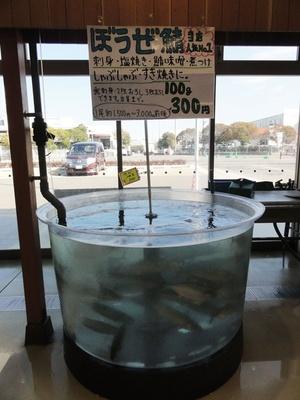 ぼうぜ鯖は1尾1,500円~3,000円ほど