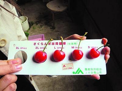 佐藤錦は、規格よりやや小さい粒も入る