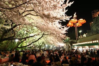 昼間とは違った雰囲気を楽しめる夜桜のライトアップ