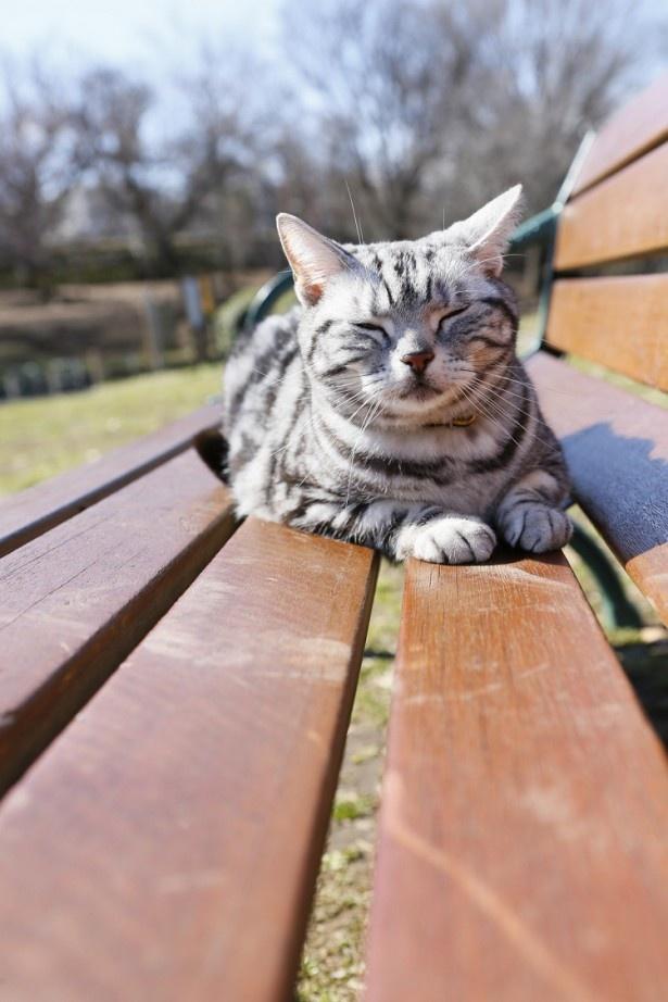 「グーグーだって猫である」(WOWOW)に出演するグミ