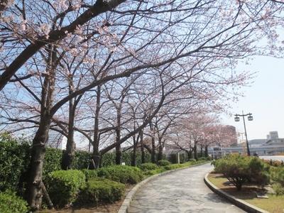「隅田川」が流れる蔵前駅周辺には、春にはサクラが咲く歩道も