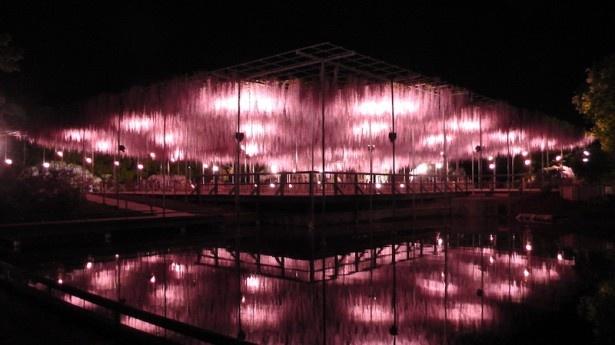 ライトアップの姿を水面に映す「大長藤」