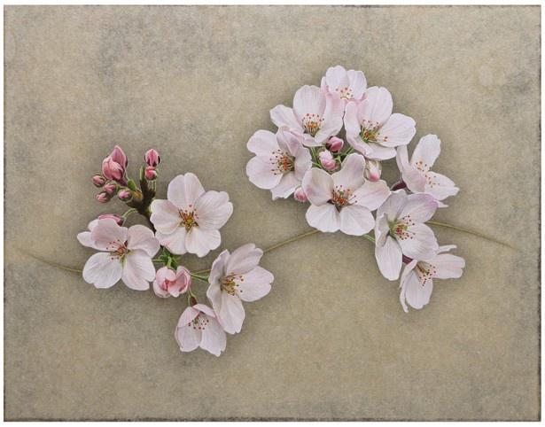 繊細な描写で描かれた木村佳代子の「DANCE」