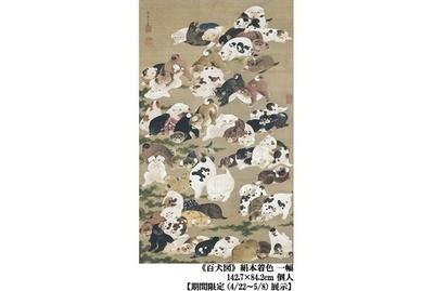 画面いっぱいにさまざまに遊ぶ仔犬が描かれた「百犬図」。同じ目の形をしているのが印象的だ