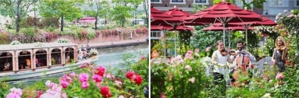 バラのある風景と音楽の優雅なコラボレーションに浸ろう