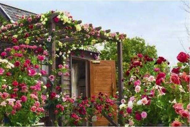 マリーアントワネットが愛したバラなど、貴重なバラ500品種以上をコレクションするオールドローズガーデン