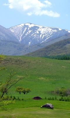 【写真を見る】春のおすすめは、美しい残雪の日高山脈を背にした「アース・ガーデン」