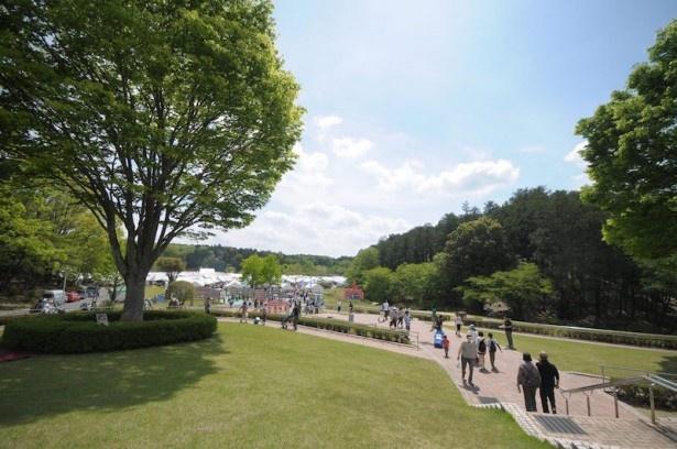 【写真を見る】散歩するだけでも気持ちの良い笠間芸術の森公園イベント広場が会場となる