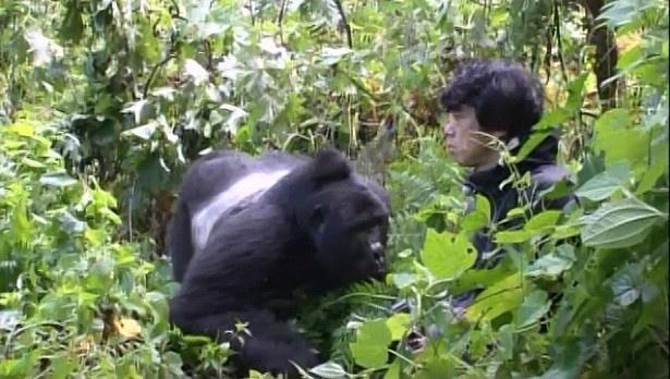 """【写真を見る】ゴリラと急接近した庄司智春は、""""野生のゴリラと2ショット撮影""""というミッションを達成できるか!?"""