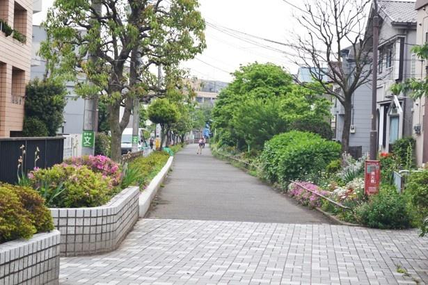 江戸時代に人々の生活用水として使われていた水路「玉川上水」の上は、公園として整備されている