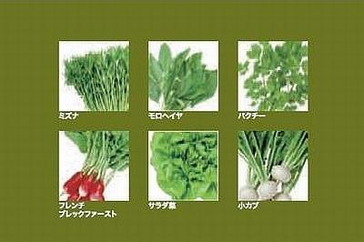 第1弾ではミズナ、モロヘイヤ、パクチー、フレンチブレックファースト、サラダ菜、小カブの6種類が登場