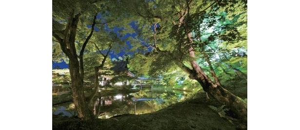 ライトアップされた境内は荘厳な雰囲気に包まれる。臥竜池(がりょうち)の水面に映りこんだ木々や、重要文化財の開山堂は絶景
