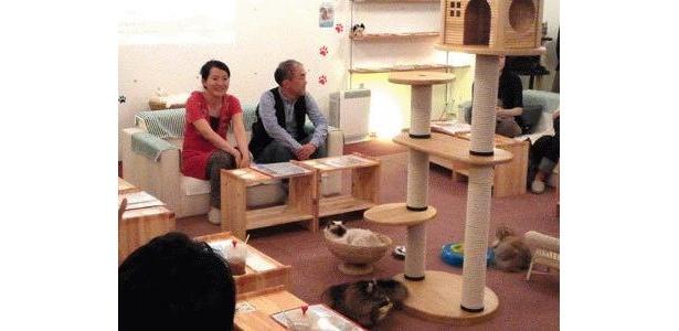 猫たちがまったりとくつろぐ猫カフェにて、ほのぼのした座談会が行なわれた
