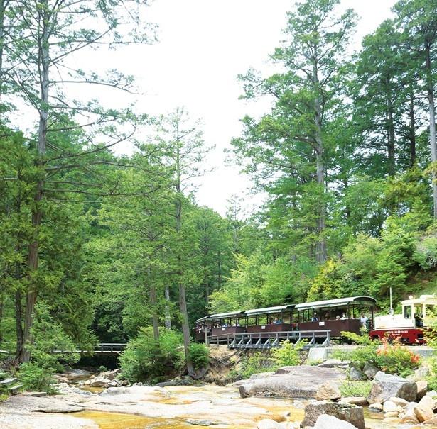 森林浴発祥の地として知られる「赤沢自然休養林」
