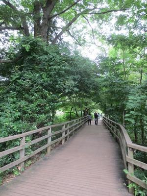 自然密度が高い、三宝寺池付近の通り(「石神井公園」)
