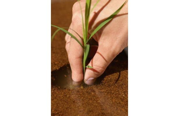 今では貴重になった「田植え体験」に親子で参加しよう
