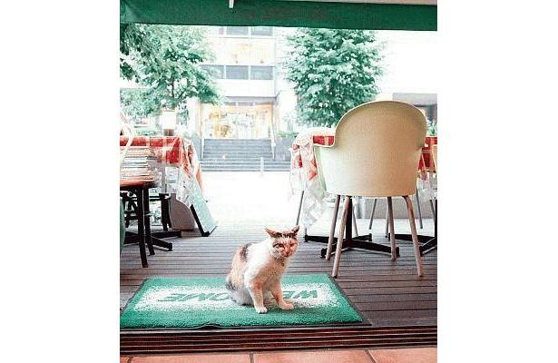 「ピザハウス モッコ センター北店」のブチちゃんは、近所の原っぱで生まれ、子供のころから母親と店に来ていたノラネコ