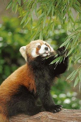 横浜市立野毛山動物園のキンタちゃんは、実は女の子
