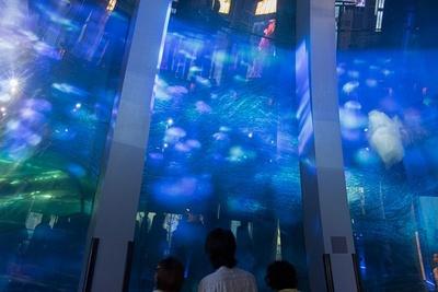 【写真を見る】イワシの大群の前にクラゲの映像が重なる幻想的な水景