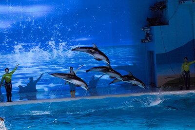 壁面に映しだされた映像に併せてイルカがジャンプ!