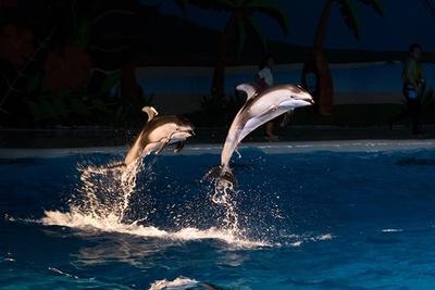 イルカのジャンプ!濡れた肌が照明によって光り輝く