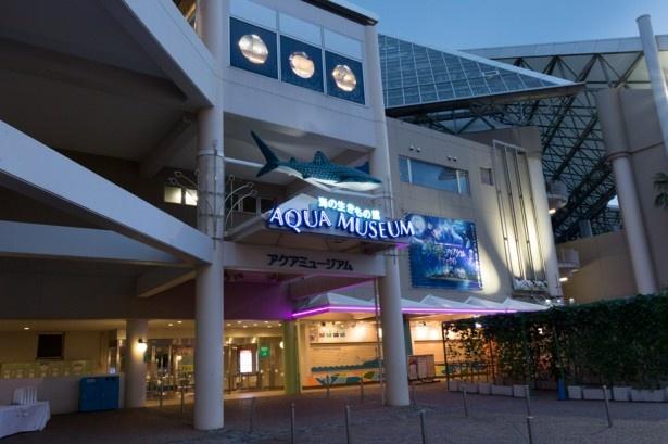 夕方5時からのアクアミュージアムは楽しさいっぱい!