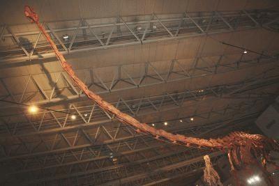 カメラに収まりきれないデカさを会場で体感して!世界初公開「ジャイアント・マメンキサウルス」