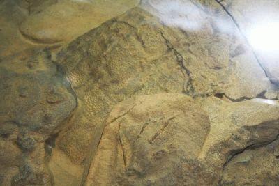 日本初公開!ウロコも見られる恐竜のミイラ化石「ダコタ」 【その他激アツ恐竜画像はコチラ】