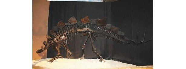 ステゴサウルスもすごい迫力!