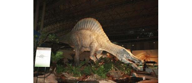 サハラ砂漠の恐竜「スピノサウルス」も!
