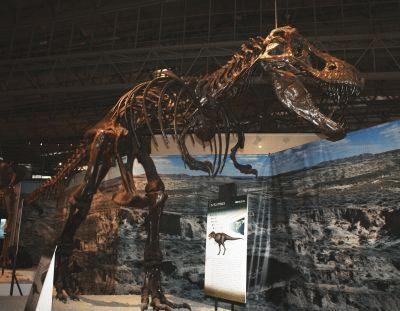 最も有名なあの暴君恐竜「ティランノサウルス」も登場!