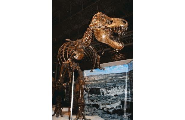 「ティランノサウルス」はやっぱり迫力満点です