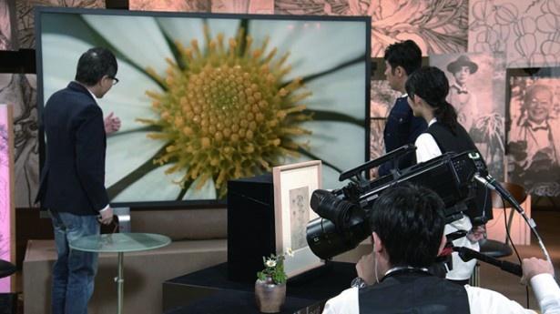 8K画質で映し出されたノジギクの質感に出演者も仰天