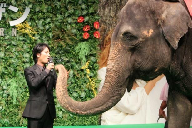 【写真を見る】ゾウとスキンシップしてほのぼのする桐谷健太
